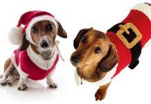 Christmas Santa Dog Sweater Free Knitting Patterns